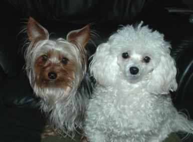 Elle James dogs - Chewy and Sweetpea