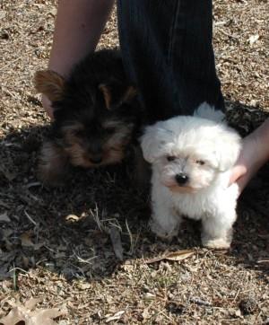 Puppies 3-4-06